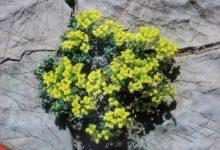 Photo of فصلنامه کوه شماره ۷۴
